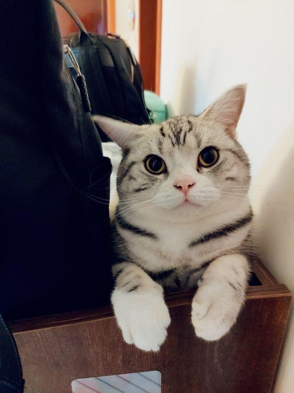 photo chatte de femme
