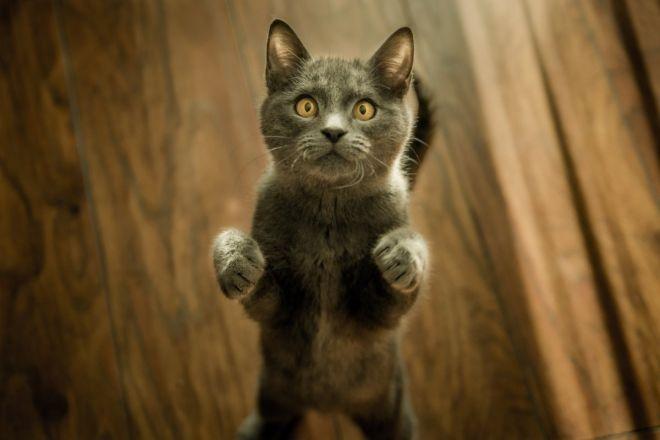 Noir chatte noir chatte