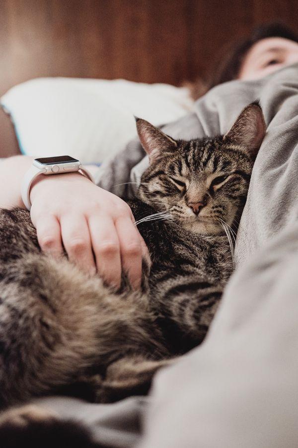 noir chatte maison vidéo