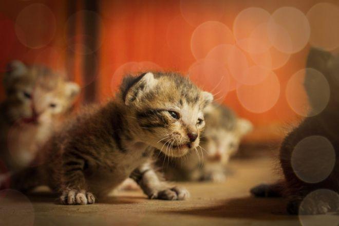 chatte de mamie elle ne porte pas de culotte