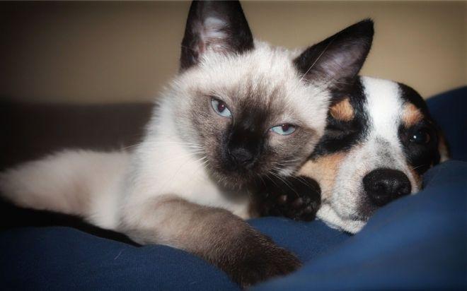 coups de chatte jolie