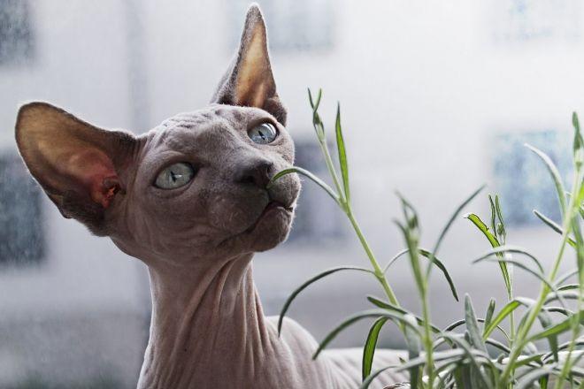 Images de trou de chatte