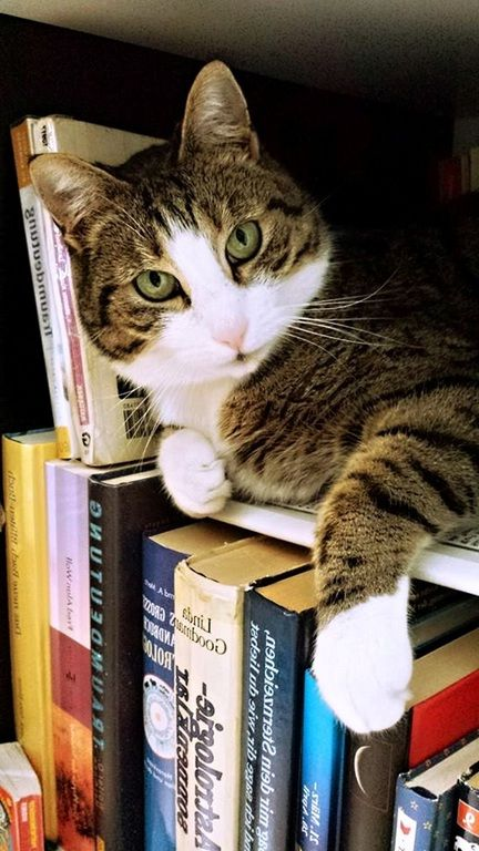 chatte trempée vieille salope a gros seins