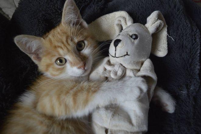chatte bien rasee jenny la salope