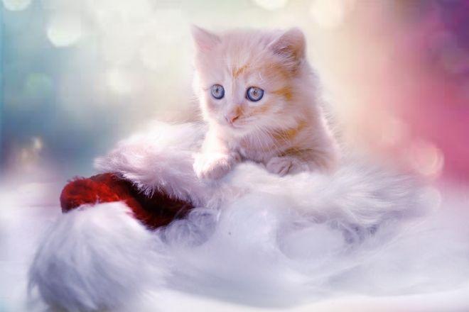 belle mamie salope elle exhibe sa chatte
