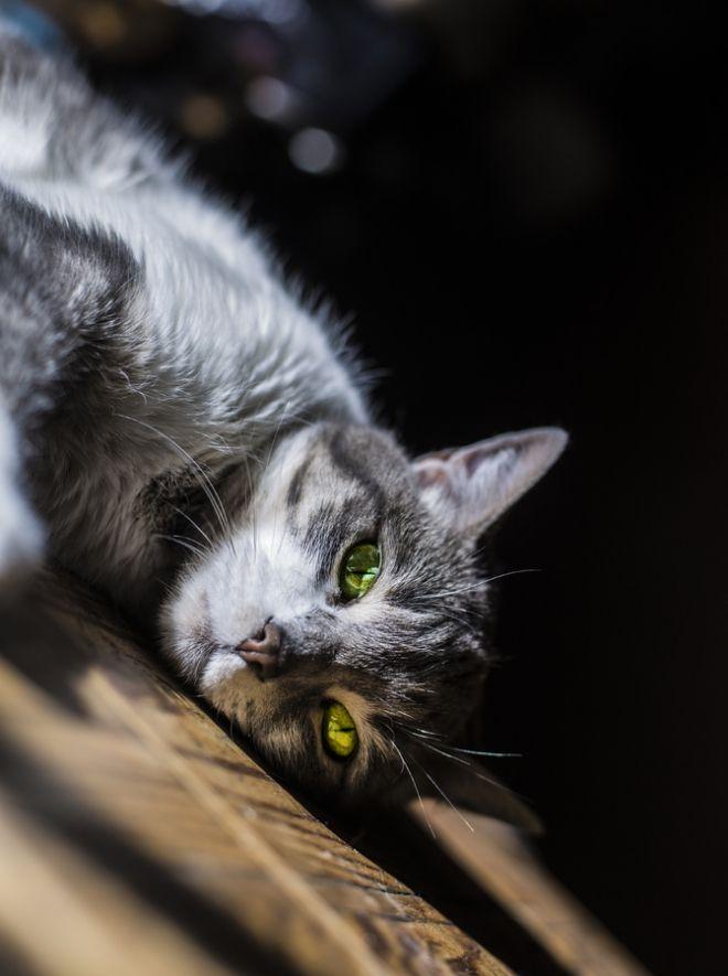 Gratuit ébène chatte lécher