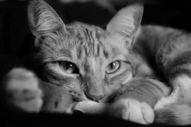 chatte metisse il suce sa bite