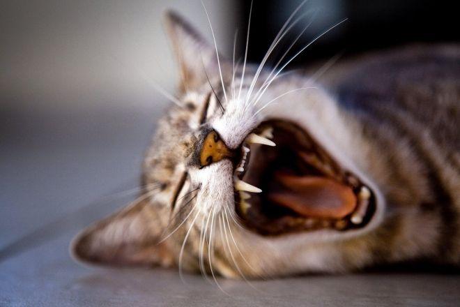 6 chattes en feu - 2 9