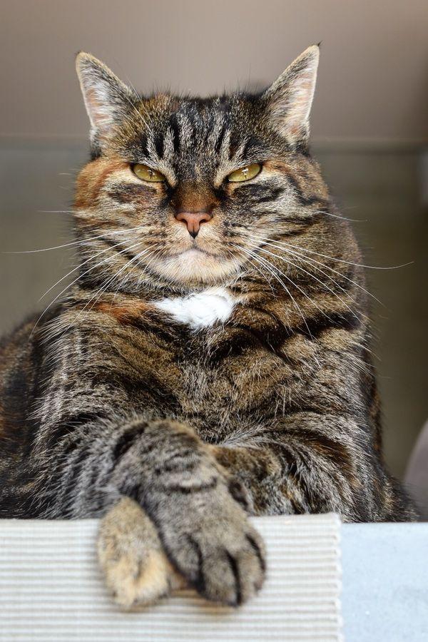 elle montre son minou chatte de salope poilue