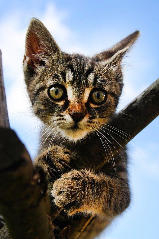 Epilation de la chatte avec une jolie vue - 3 part 9
