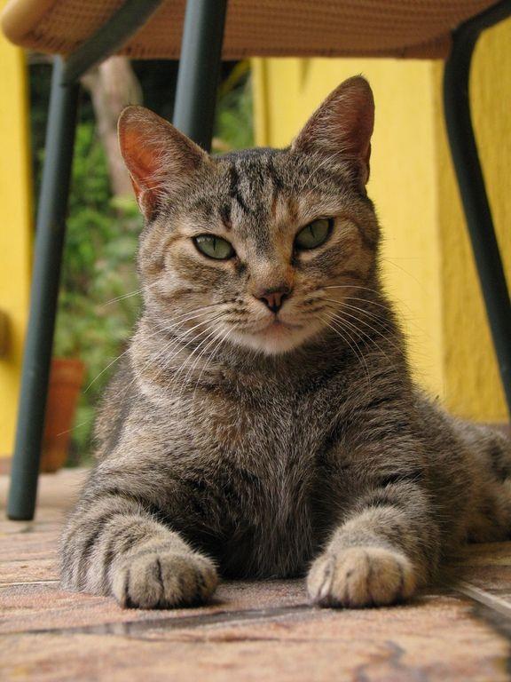 Dans ma chatte y a de la mouille - 2 part 4