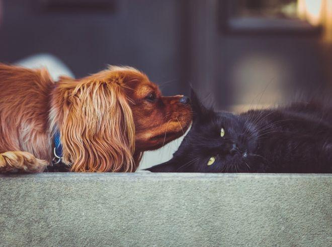 fille qui montre sa chatte mature cheveux court