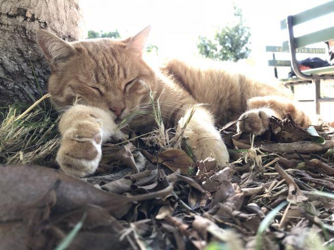 Comment la chatte poilue de ma femme mouille en dormant 2 - 2 part 3